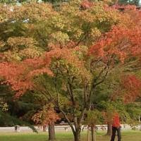 京都御所の秋
