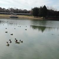 蜻蛉池で・・・