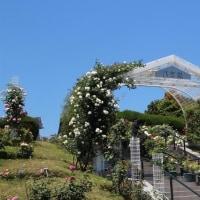 2017年 ローズフェスティバル 広島植物公園 / La vie en rose