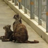 沖縄の猫4