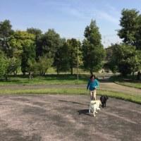 初夏のきざし ~お久しぶりです 1か月ぶりのブログ更新~