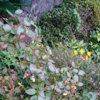 また、ブルーベリーに花