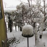 取った豆は雪の下に