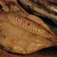 疣鯛(イボダイ)・エボダイ