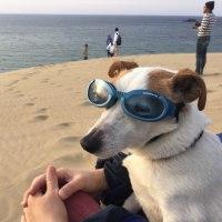 鳥取砂丘 ゴールデンウィークイベント!