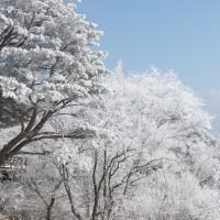 樹氷満開!