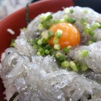 「かあちゃんの店」で生しらす丼を食べて体内を浄化(;^ω^)