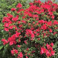 亡き母の花