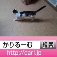 2016/09/01(18:09:52)写真 猫H