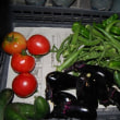 今日の収穫 トマト ナス キュウリ オクラ インゲン シシトウ