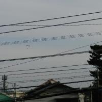 どんより曇った寒いある日、遠くにパラグライダーが飛んでいた