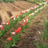 春の風景が広がります。