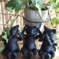 我が家の黒猫