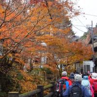 晩秋の高尾山 2016.12.4