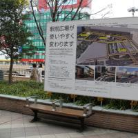 JR仙台駅西口のモッコク(木斛) 2016年12月10日(土)