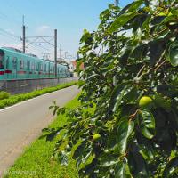 西鉄甘木線の夏景色