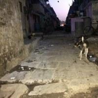 インドのジカウイルス感染症をめぐるドタバタ劇