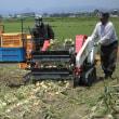 仙台市の(農)井土生産組合で玉ねぎの出荷が始まりました。