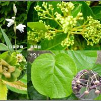 image2377 植物も生き生き