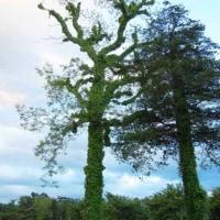 ぐるぐるま木