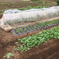 充実した農作業