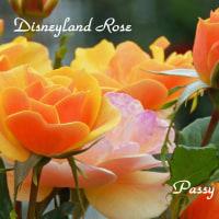 薔薇の園  * 2016 *  Vol.27 * ディズニーランドローズ *