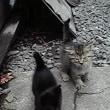 野良猫が子猫を産んだの?