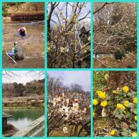 早春の薬師池公園