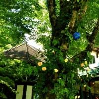 箱根・ムラーノ村、薔薇とガラスのコラボ ❛1❜
