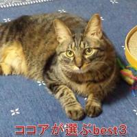 【出産祝い】ビー・マム・ベイビーオンラインサイトから貴方が欲しいものベスト3