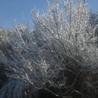 2月19日、朝の雪と、青空と、梅の木に雪、白あれこれ