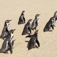 4月24日(月)のつぶやき 帰路、途中長崎ペンギン水族館、サントリー熊本工場見学へ