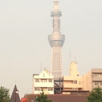 2013ほおずき市