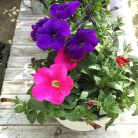 5回目のIT相談!㈱スプラム代表取締役社長竹内先生。そして花寄せ植え2つ掲載
