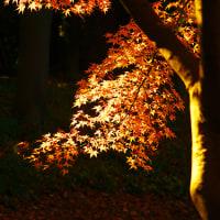 小石川後楽園・紅葉の輝く光と影の世界