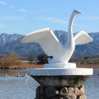 足湯と白鳥