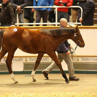 【Tattersalls December Sale 2016】の結果概要(まとめ)