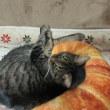 猫と幽霊の日