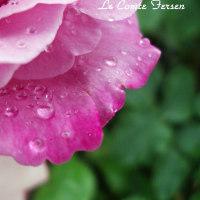 薔薇の園  * 2017 *  Vol.18 * フェルゼン伯爵 * 小雨に煌めいて.。.:*・゜