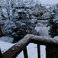 暖かい雨だった。でも、朝は暗い。2月19日の雪の朝。