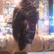 札幌まちなか探検隊  フクロウと不思議な夕焼け