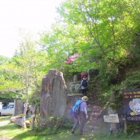 15 神ノ倉山(561m:安佐北区)登山  ツツジもまだ健在で
