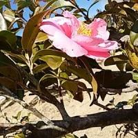 万葉の岬・・は、春まだ浅き。・・