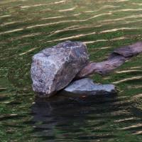 カワセミ:そよ風がミラーリングの川面を揺らすと翡翠が飛来ーⅠ