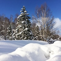 記憶的なドカ雪も吹雪もうんざり