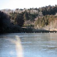 毎朝の冷え込みが厳しい常陸の国で古徳沼も全面結氷しました