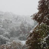 2016年 初雪 11月24日