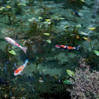 モネの池 その3
