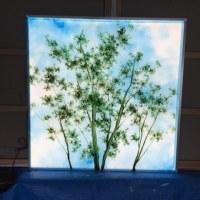 LEDパネル:自ら発光する木漏れ日