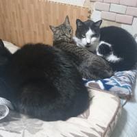 ある日の3猫
